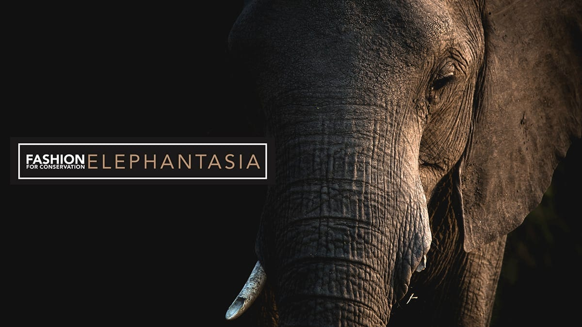 What Can We Do to Save the African Elephants