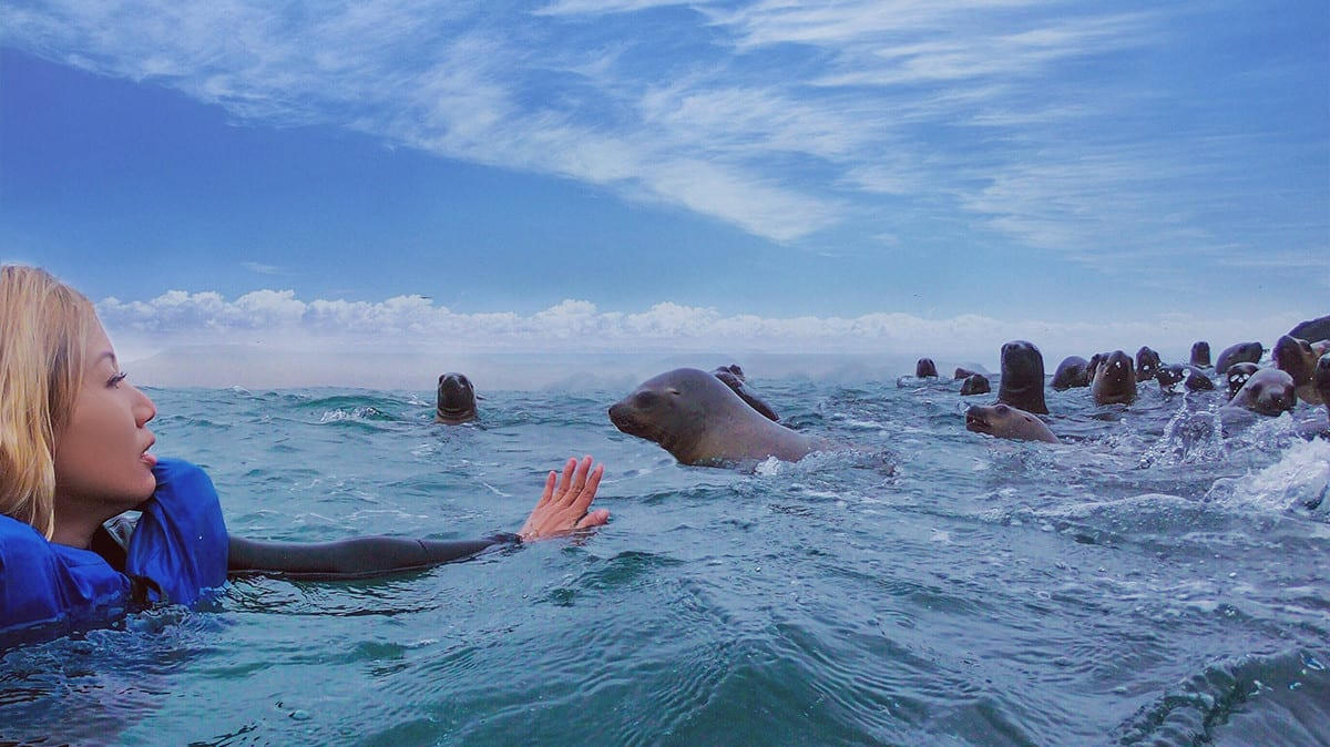 Swimming with sea lions in Peru 11