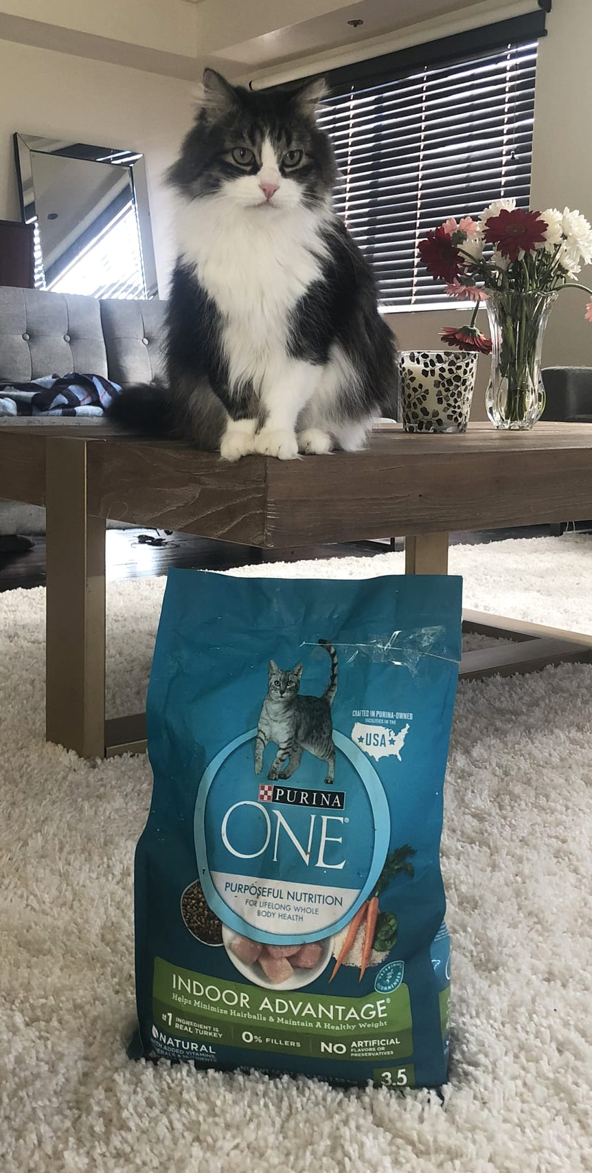 Purina One - 28 Day Challenge