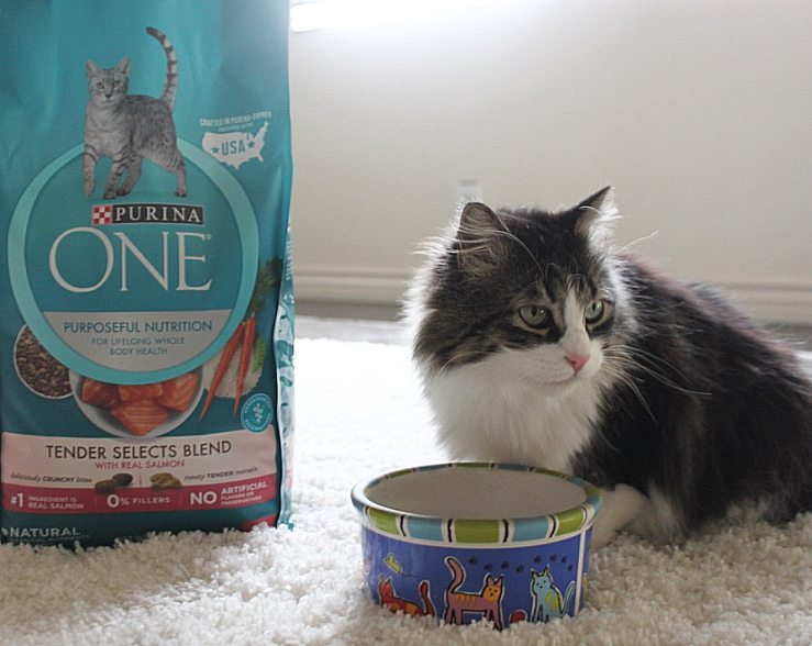Purina One - 28 Day Challenge- How to Pamper your Cat