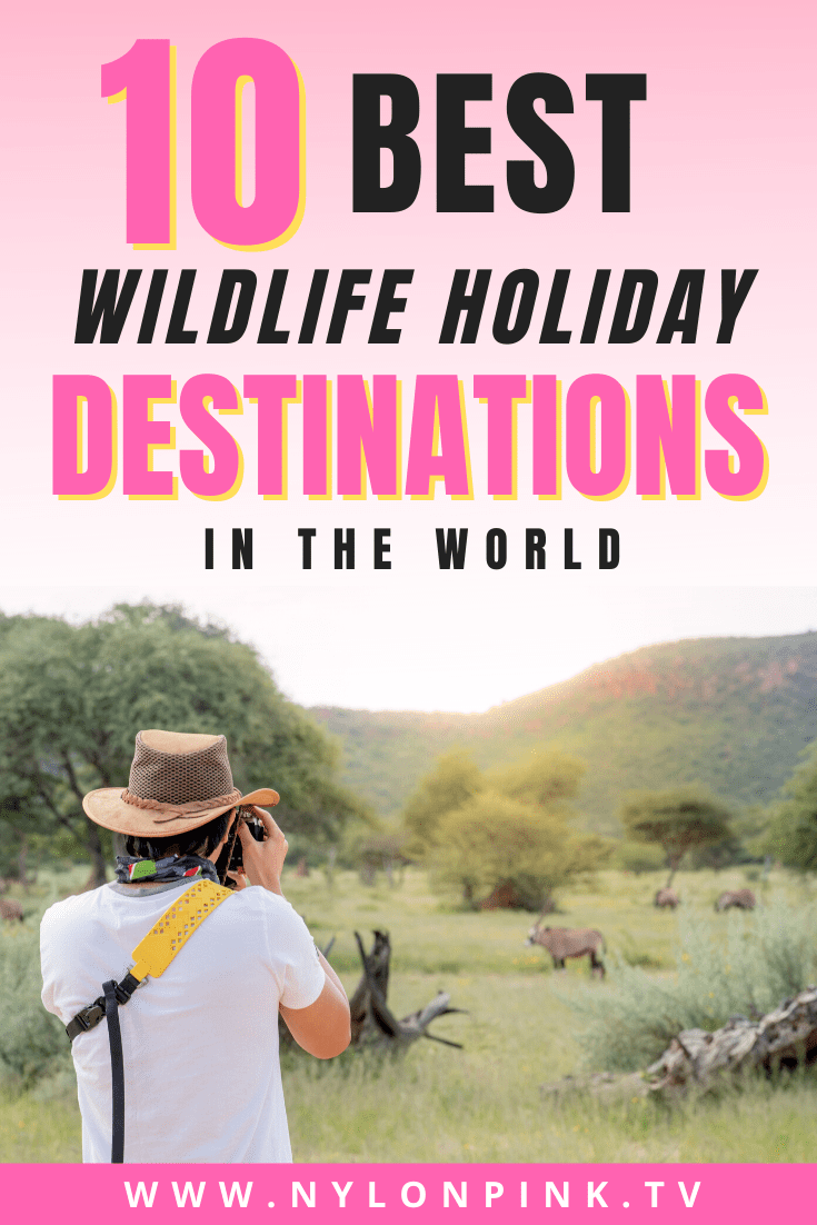 There's nothing quite like seeing animals in the wild. Though most people would jump at the chance to go on safari in Kenya, it certainly shouldn't be the only country a wildlife lover should visit! There are loads of countries in the world that offer unique wildlife spotting opportunities - you just need to know where to look!  #wildlife #travel #safari #traveldestinations #traveltheworld